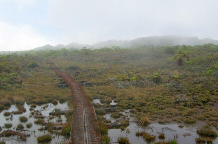 8. Alakai Swamp Trail