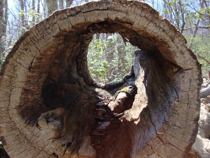 6. Don't you touch that hollow log, dude.