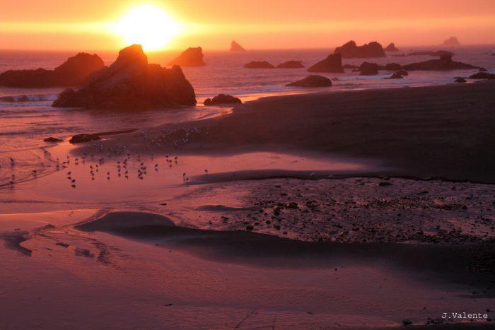 1. Harris Beach State Park