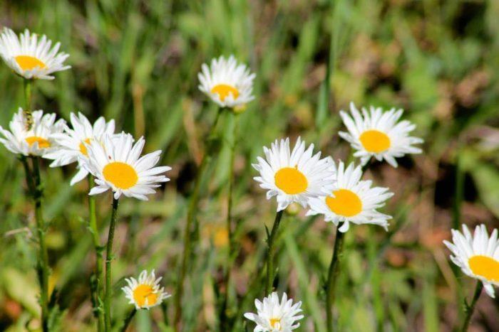 2. Wildflowers