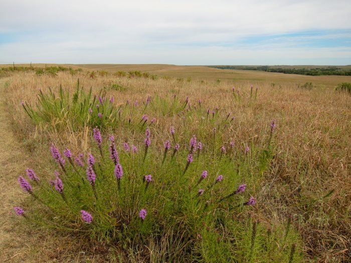 4. Tallgrass Prairie National Preserve (Chase County)