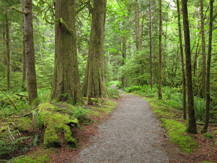 2. Trail of the Cedars, Newhalem
