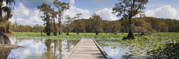 1. Caddo Lake (Karnack)
