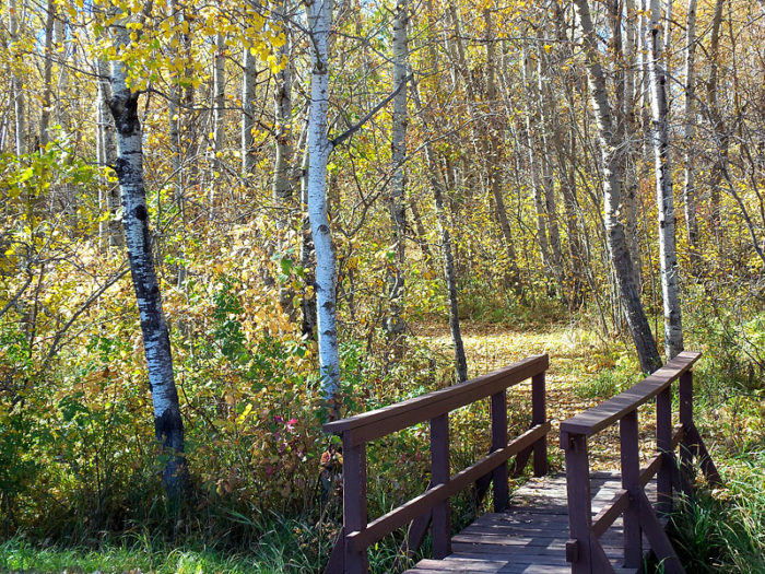 3. Old Oak Trail - 3 miles