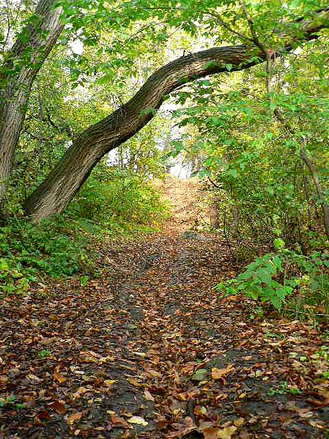 7. Northern Pine Loop