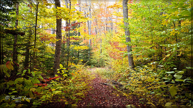 9. The New Hampshire woods look positively magical in this photo... they're glowing!