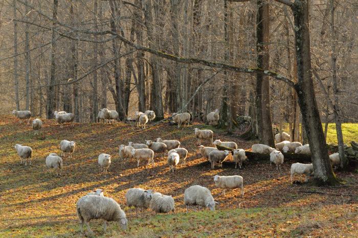 4.  Animals grazing.