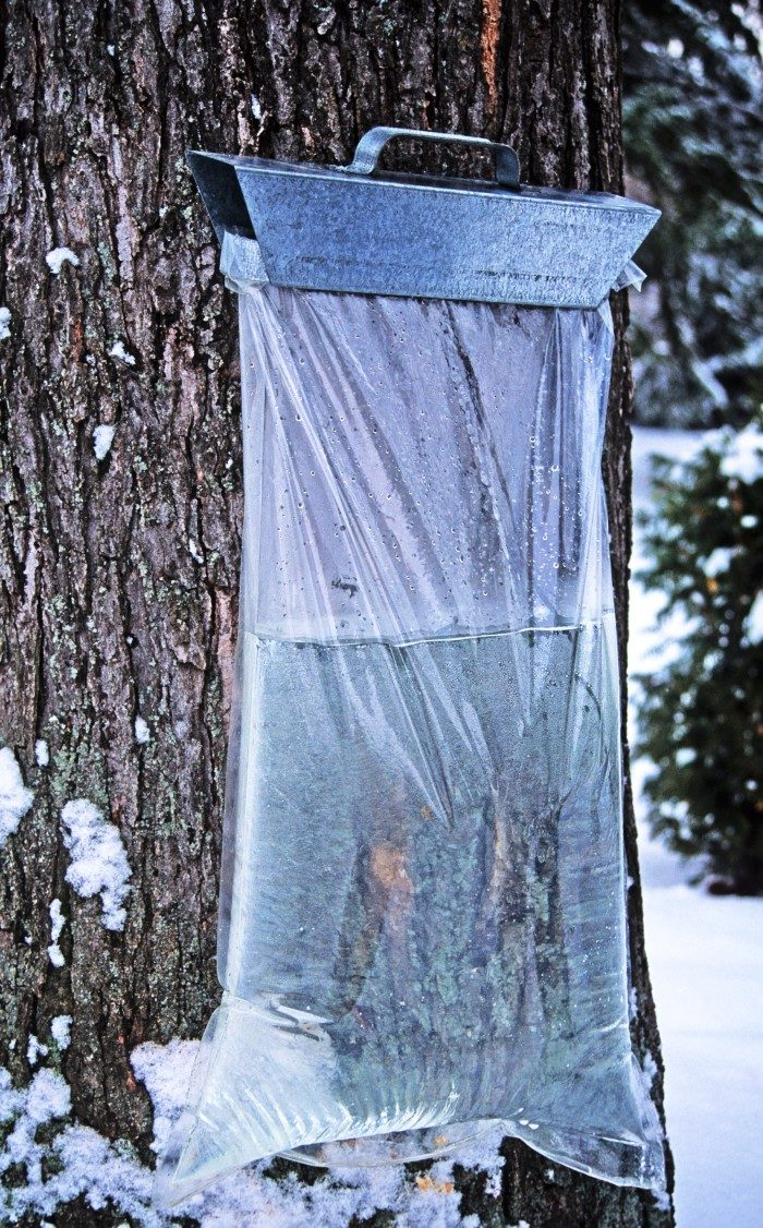 7. In the winter, go tap a tree and make syrup! It takes time, but the payoff is always sweet!