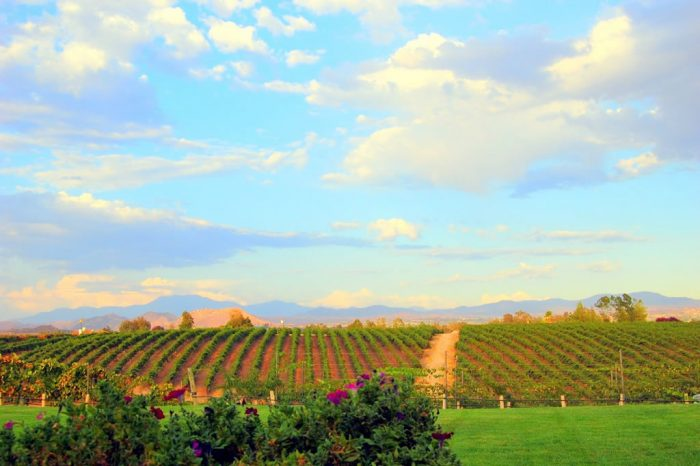 12. Head to a vineyard in Temecula and sample some wine.