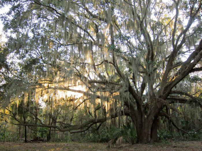 Florida: Payne's Prairie Preserve State Park