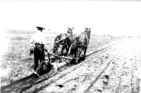 8. Plowing the old-school way with the team we saved up money for years to buy.