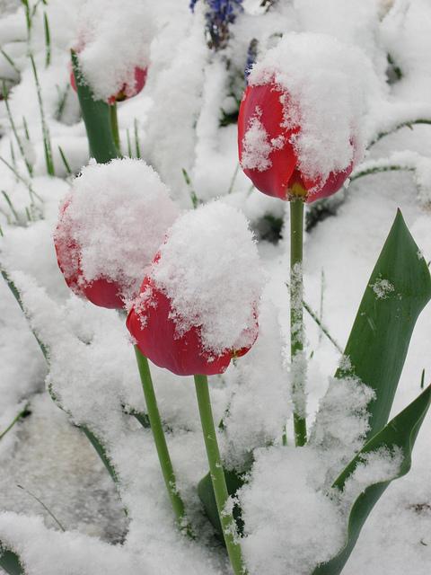 1. Snow, in April.