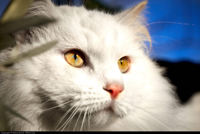 7. The state law says that it's illegal to sell the meat of a cat for food.