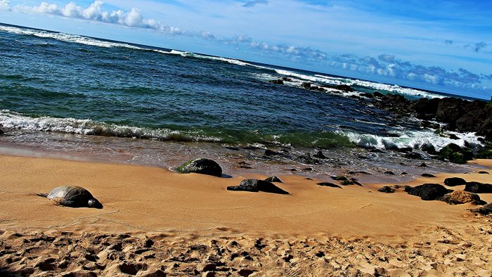 7. Check out Laniakea Beach for the chance to hang out with honu.