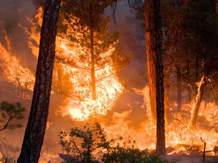 8. The Bugaboo Scrub Fire of 2007
