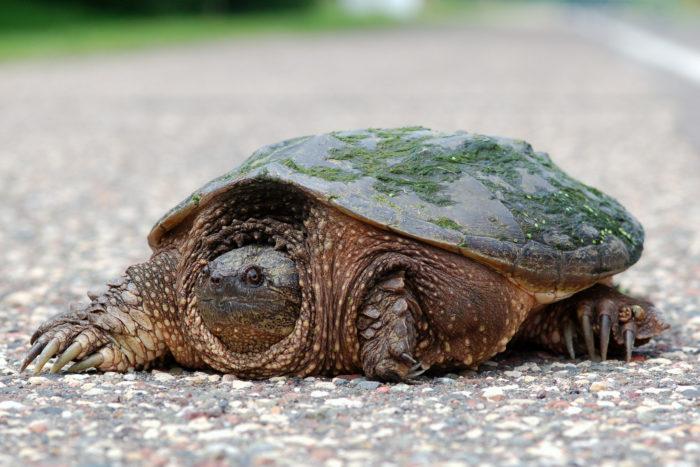 6. Turtle Run, Bethany Beach