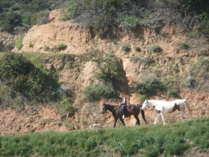 5. Horseback Riding in Griffith Park in Los Angeles