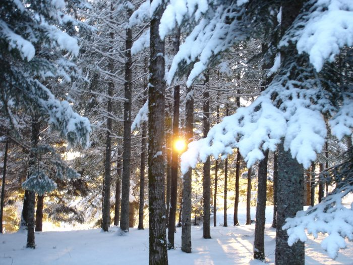 6. Early, snowy mornings in Presque Isle are lovely.