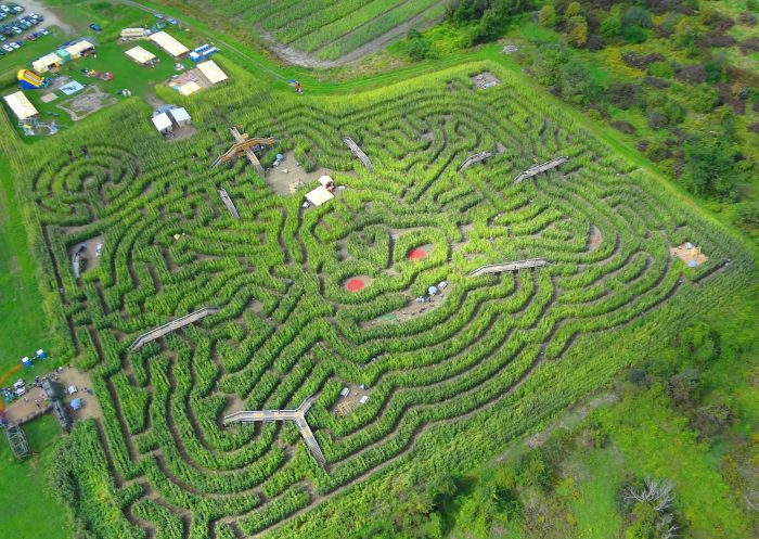 6. Attempt the epic corn stalk maze at Davis Farm in Sterling.