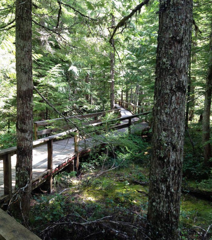 3. Trail of Two Forests, near Mount St. Helens