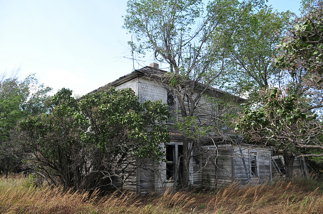 4. An abandoned house with trees literally growing out of it.