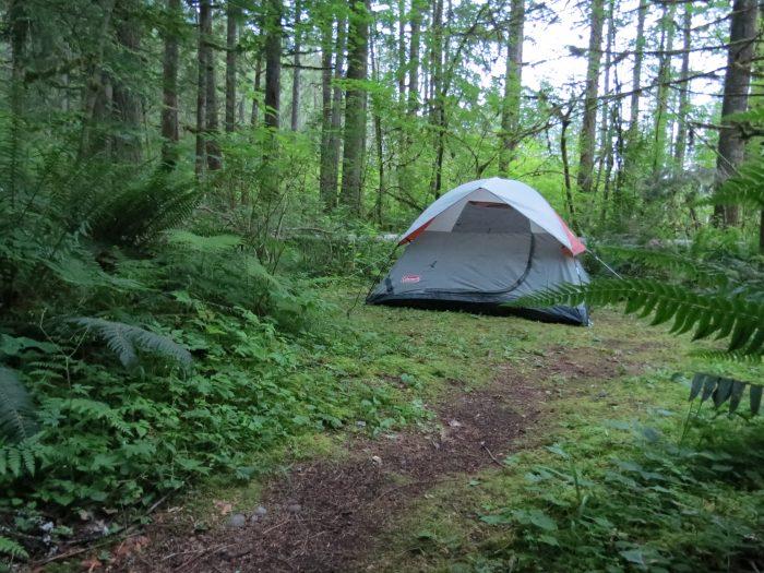 11. Big Creek Campground (Ashford)