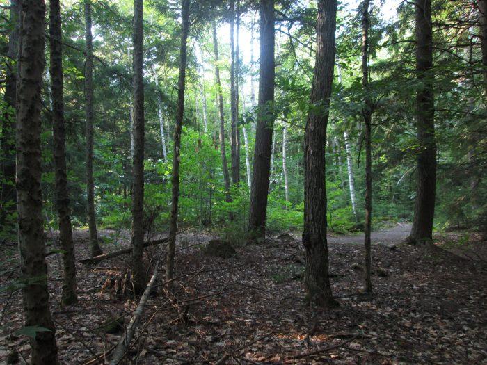 9. Browns Woods, West Des Moines, Iowa