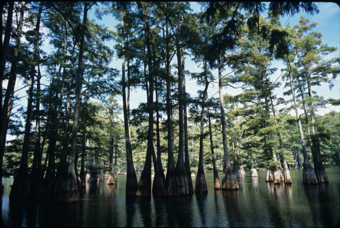 3. Big Thicket National Preserve