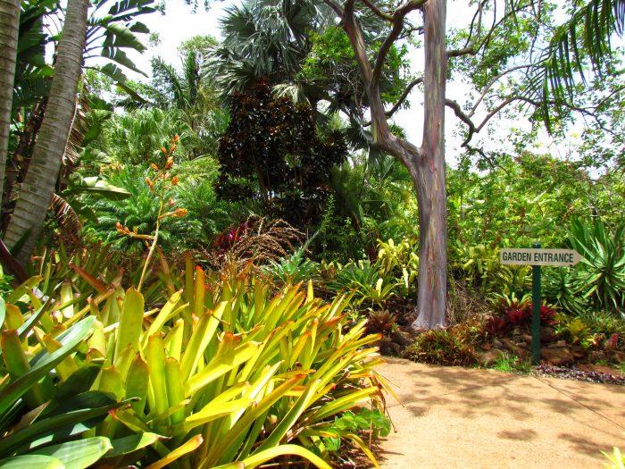 8. Explore exotic plants at Allerton Garden.
