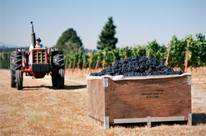 6. Taste wine in the Willamette Valley.