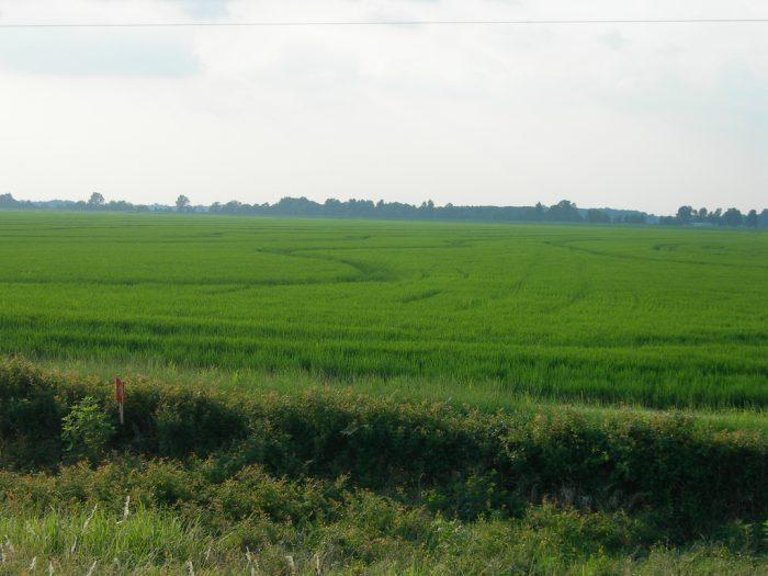 15. Rice Fields (Delta)