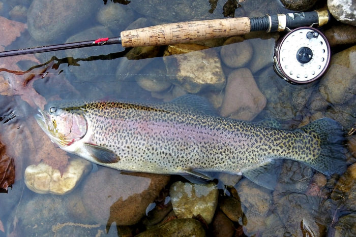 4. Now spend a few hours with a pole in one of West Virginia's famous trout streams.