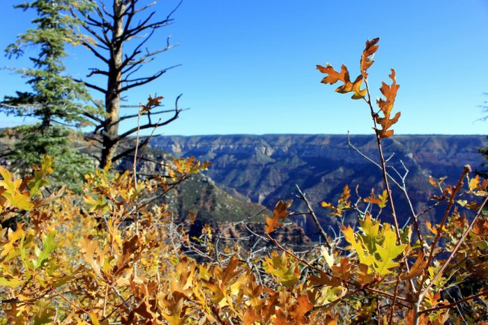 10. A little later in the year when fall arrives, the North Rim is perfect for seeing the changing leaves.