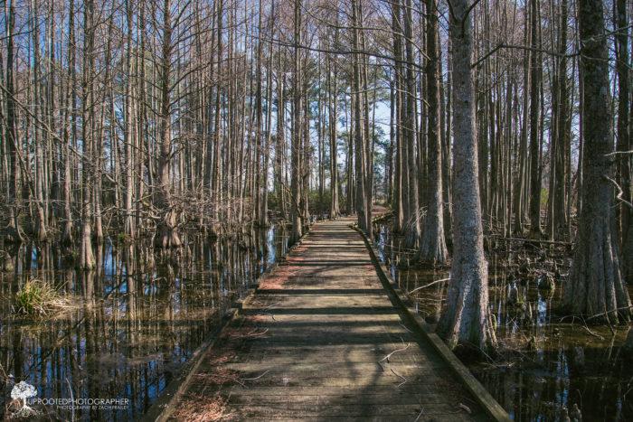 2. Lake Mattamuskeet
