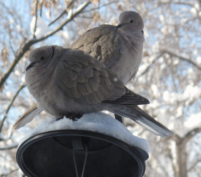 1.  Doves can be out in the cold...