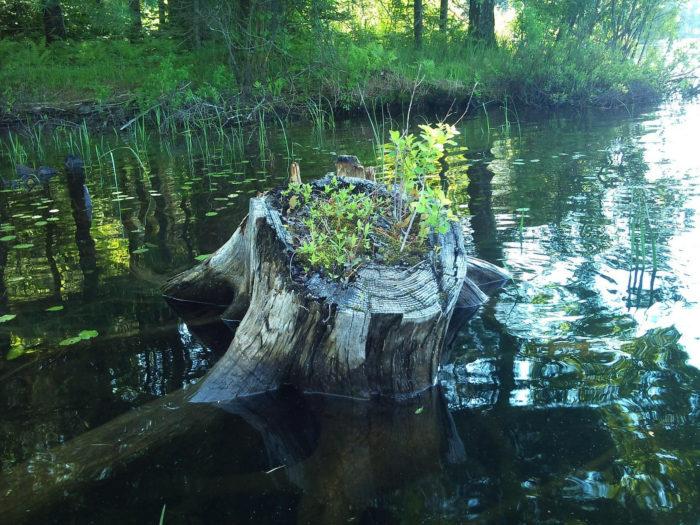 15.  Gale Meadows Pond, Londonderry