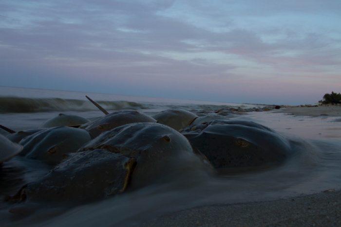 6. Delaware's bay shores