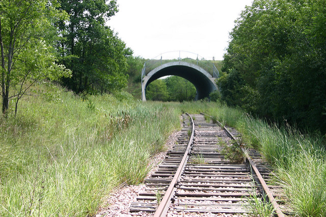 6. Prairie grass reclaiming these old railroad tracks.