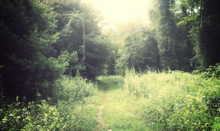 Connecticut: Tunxis Trail