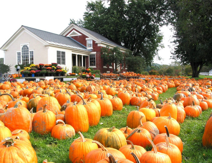 7.  Pumpkins in the Winooski River Valley.