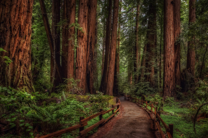 3. Redwood and Sequoia Forests, California