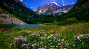 These 11 Epic Wildflower Hikes Around Denver Are Completely Out Of This World