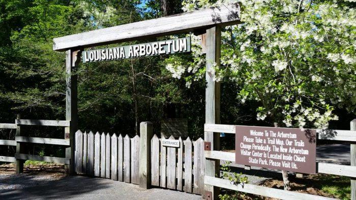 Louisiana: Louisiana State Arboretum Trail, Chicot State Park