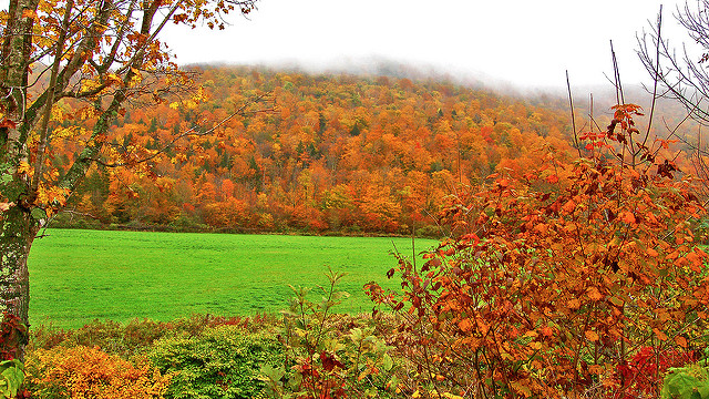 """9. Look for people who use the term """"leaf peepers."""""""