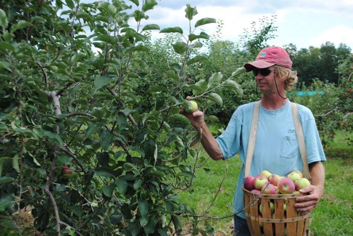 10. Pick your own produce at Lapsley Orchard in Pomfret Center.