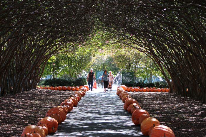 1. Dallas Arboretum (Dallas)