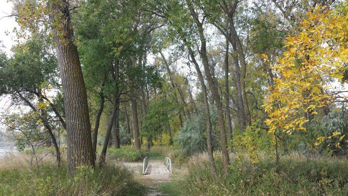 3. Cottonwood Trail