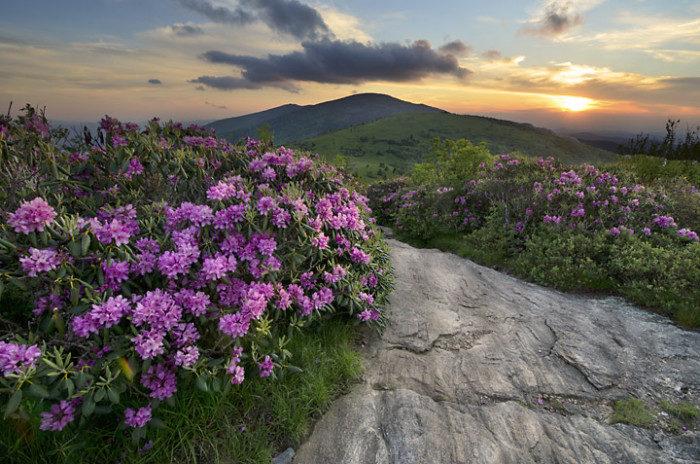 A-Roan-Mountain-sunset-700x464