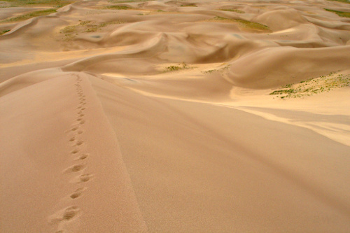2. The Dunes are the tallest in the country, with the Star Dune (pictured) reaching more than 750 feet tall!.