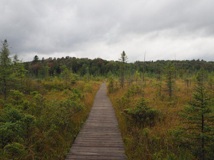 6. Explore the beautiful Adirondack Interpretive Center in Newcomb.